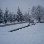 ببین باز برف می بارد»شهر یاسوج