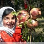انار میوه ای بهشتی
