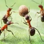پاورپوینت زیبا و پند آموز زندگی مورچه ها
