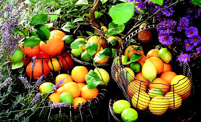 اگر چاق شدید، حتما این میوه را بخورید!