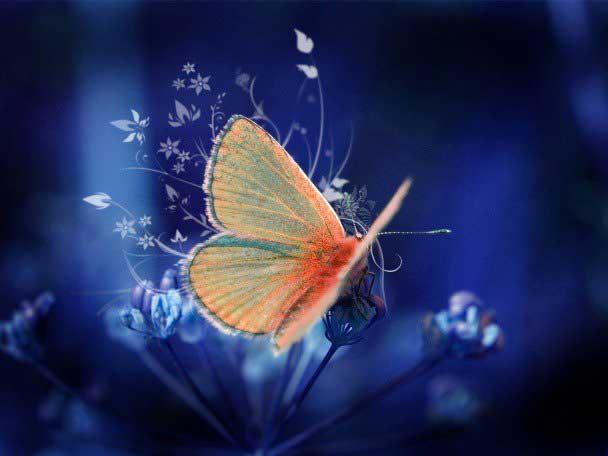 عکس های دیدنی از زیباترین پروانه های جهان!
