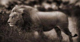 animal-rights-watch-arw-2133